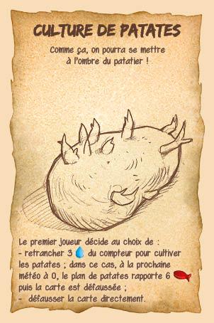 Culture de patates